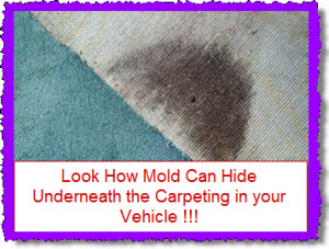 Mold or mould in your car truck van or suv hiding beneath the carpet