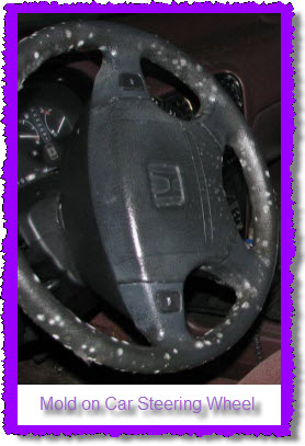 Mold can grow anywhere in your car, truck, van or suv. Here's mold on a car steering wheel.
